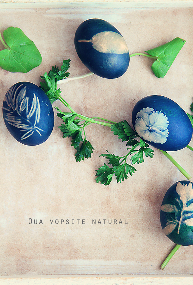 Oua vopsite natural front